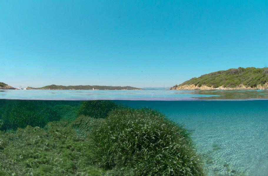 Point rencontre : Randonnée Palmée à la Plage du Sud de Port-Cros à Hyères - 0
