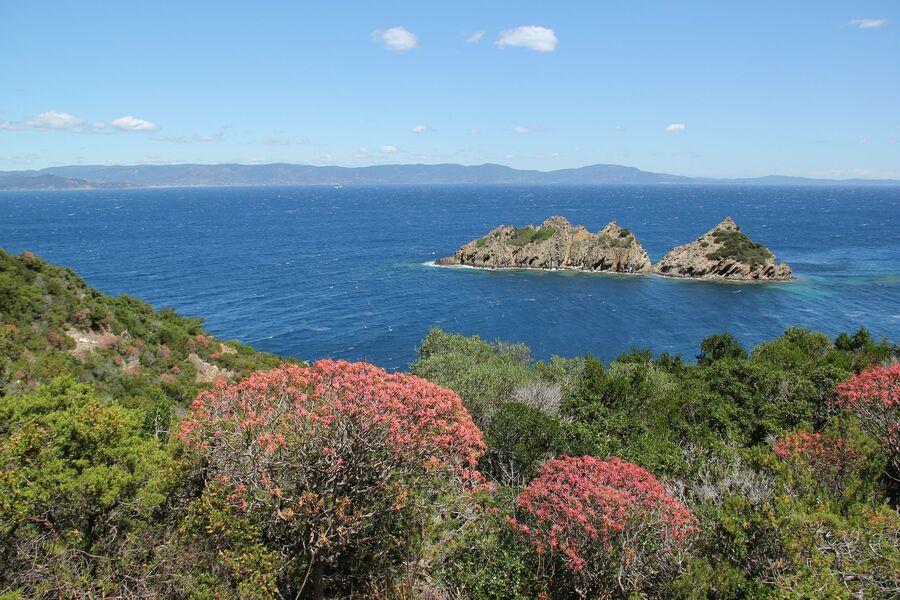 Balade découverte à Port-Cros: L'appel de la nature … à Hyères - 0