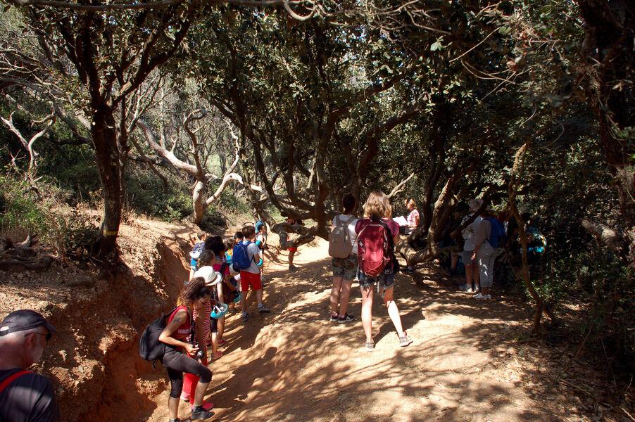 Prendre un bain de forêt sur la presqu'île de Giens à Hyères - 0